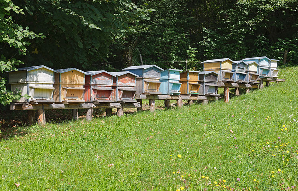 produire son propre miel pour sauver les abeilles un geste la port e de tous bio la une. Black Bedroom Furniture Sets. Home Design Ideas