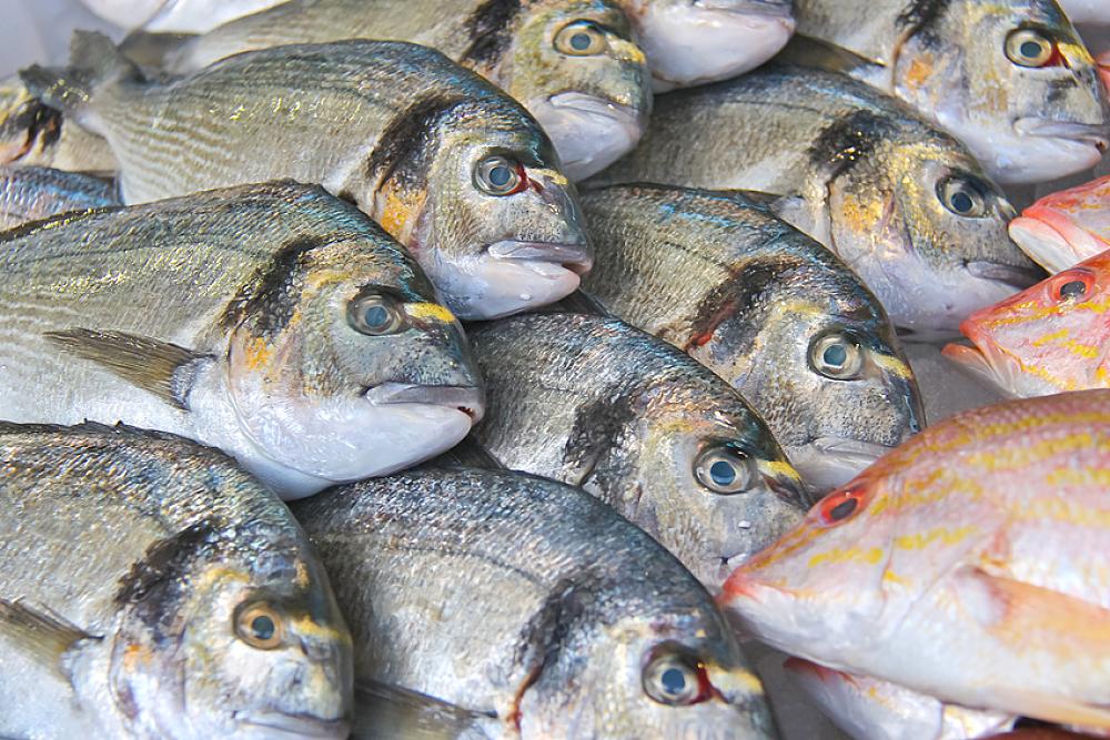 Contamination au mercure comment bien choisir son poisson bio la une - Comment choisir son televiseur ...
