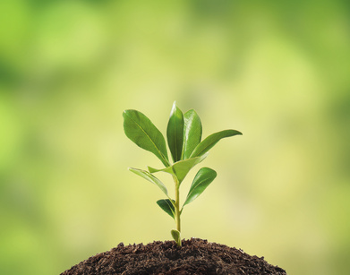 D couverte les plantes sont intelligentes bio la une for Plante vegetal