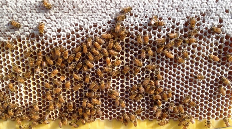 flow hive la ruche r volutionnaire avec robinet pour faire du miel sans nuire aux abeilles. Black Bedroom Furniture Sets. Home Design Ideas