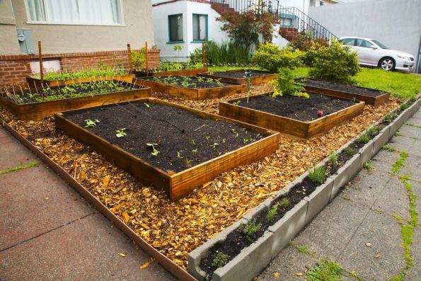 En 60 jours il est pass de quelques graines un potager bio hyper productif en permaculture - Jardin potager en bois ...