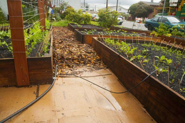 En 60 jours il est pass de quelques graines un potager for Astillas de madera para jardin