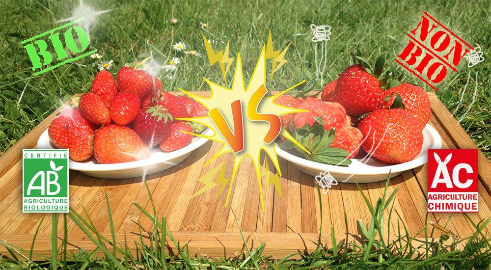 vid o les fraises bio sont elles meilleures que les autres bio la une. Black Bedroom Furniture Sets. Home Design Ideas