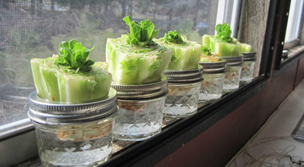 planter une salade dans un pot
