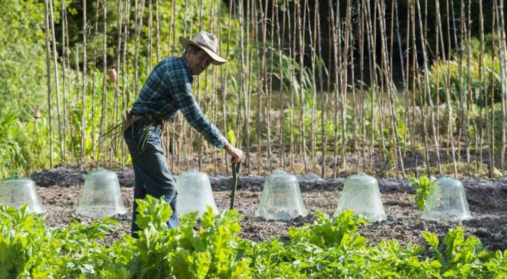 Jardinier for Jardinier conseil