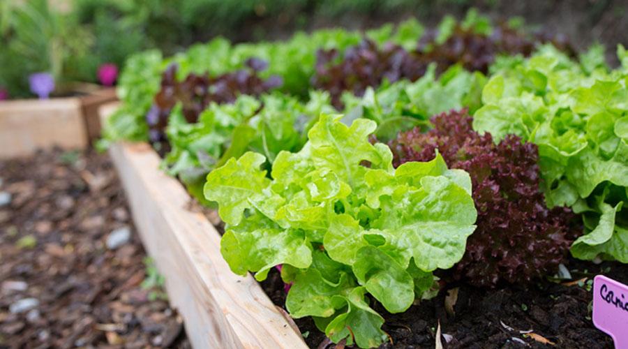 permaculture comment entretenir son jardin en mai bio la une. Black Bedroom Furniture Sets. Home Design Ideas
