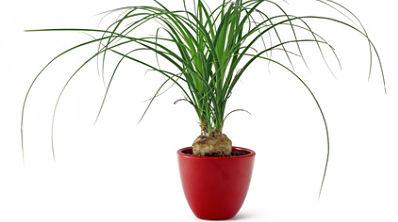 Des Plantes Depolluantes Pour Purifier La Maison Bio A La Une