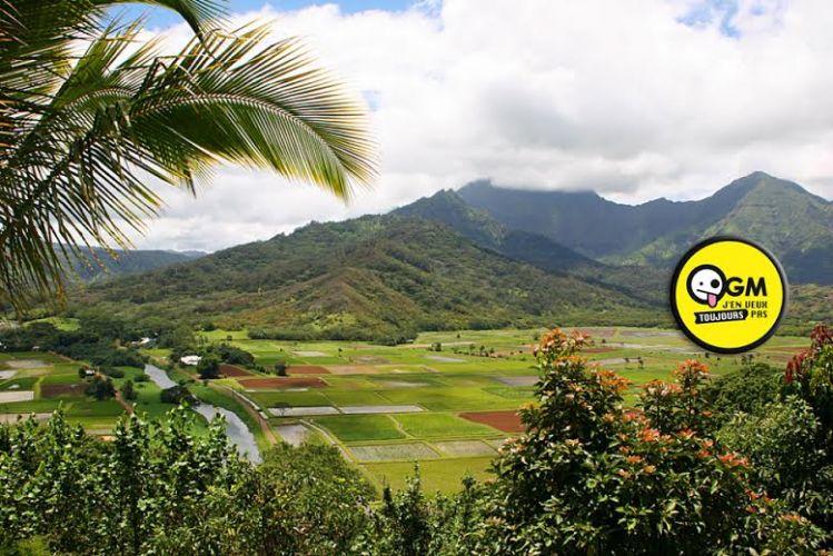 L'île d'Hawaii vote un projet de loi contre les OGM