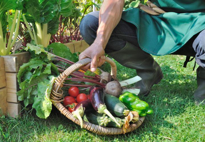 Main d'homme tenant un panier de légumes frais