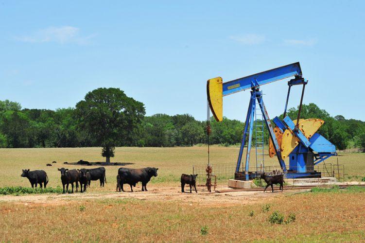 Puis de pétrole au milieu d'un champ de vaches