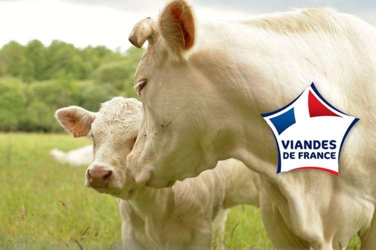 Deux vaches dans un pré