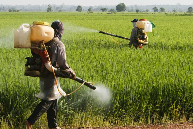 Intolérance au gluten  Monsanto serait responsable