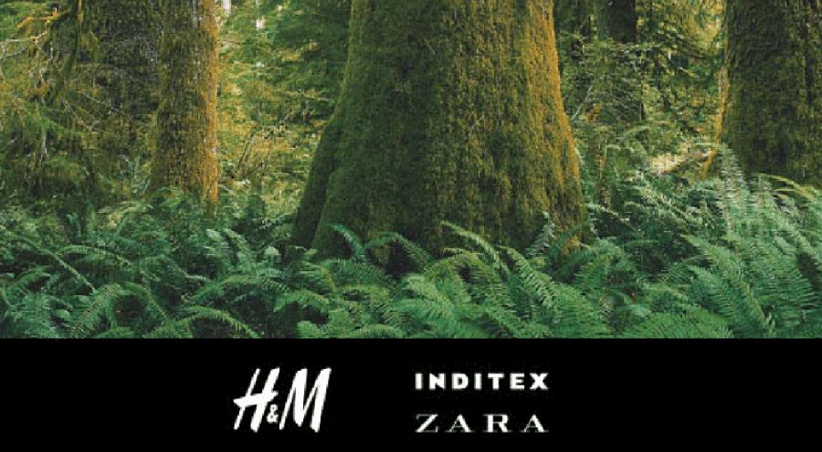 Logo des marques Zara et H&M avec une photo de forêt