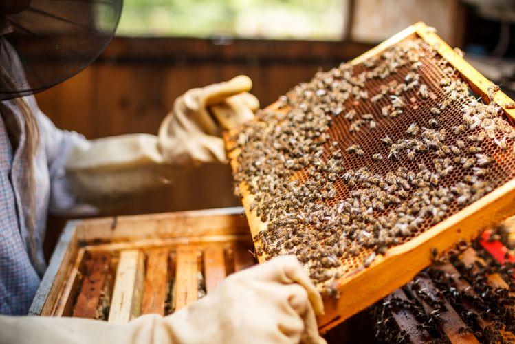 Apiculteur tenant le cadre d'une ruche