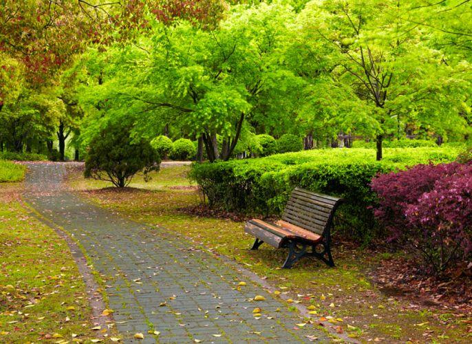 Vue d'un parc, d'une allée et d'un banc