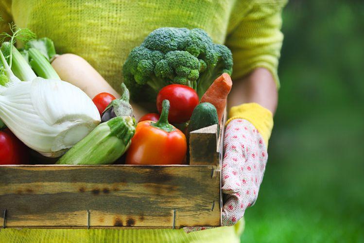 Cagette de légumes frais tenue par une femme