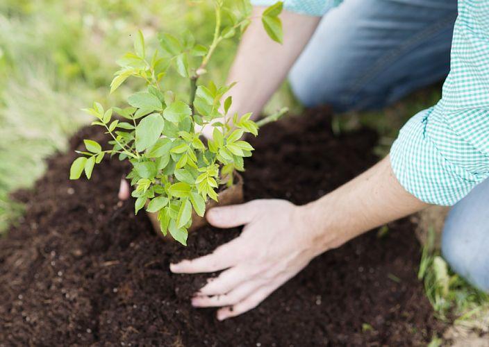 Personne en train de jardiner