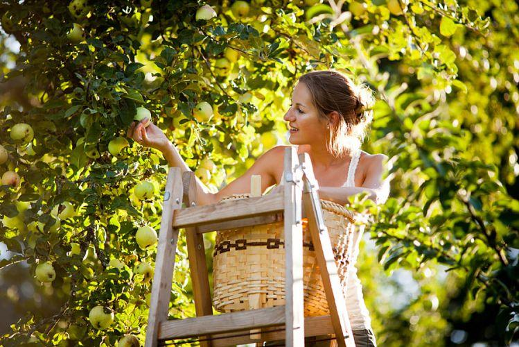 Faire sa cueillette dans le jardin du voisin