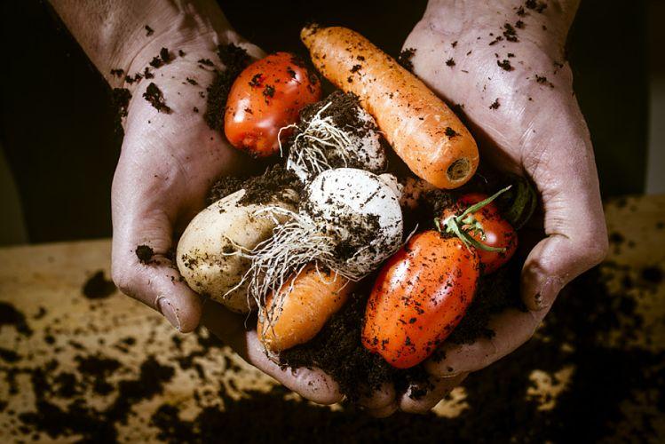 Légumes bio tenus dans les mains