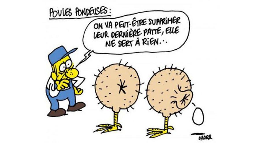 Caricature de Chab sur les poules pondeuses