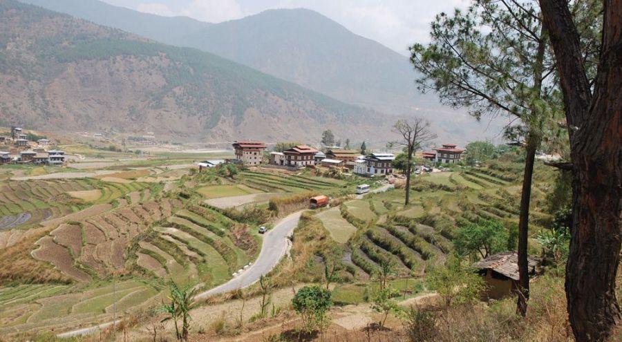Cultures de riz et cultures maraîchaires dans la vallée de Punakha.