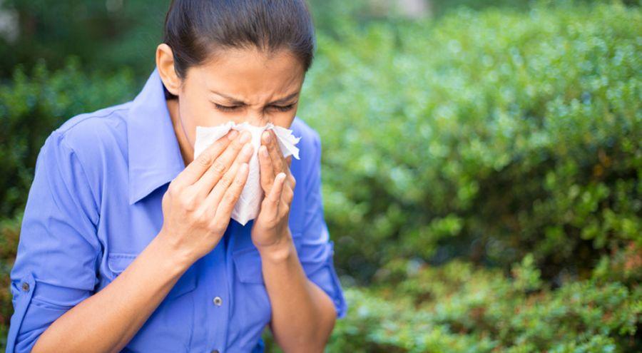 Des rem des naturels pour lutter contre les allergies - Lutter contre les doryphores bio ...