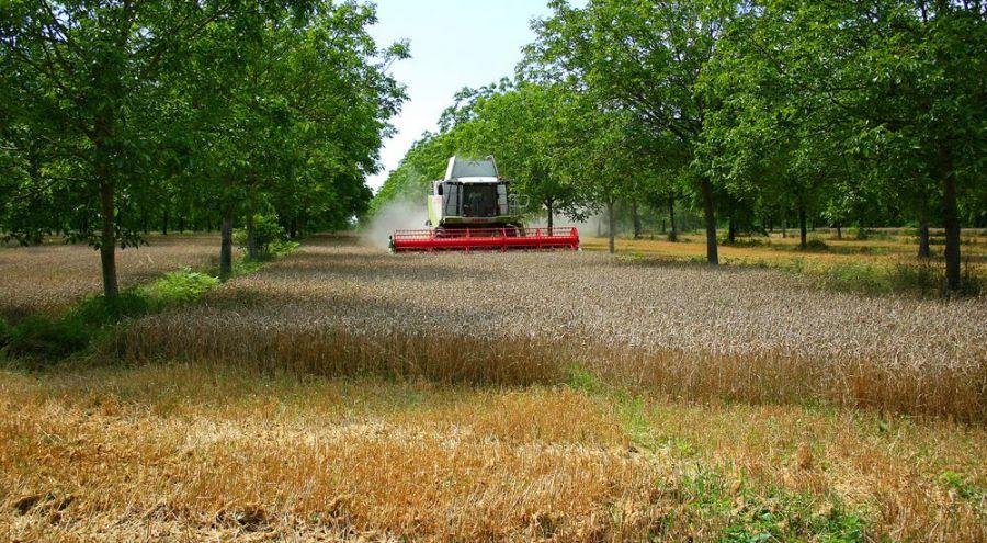 L'agroforesterie ou l'arbre paysan