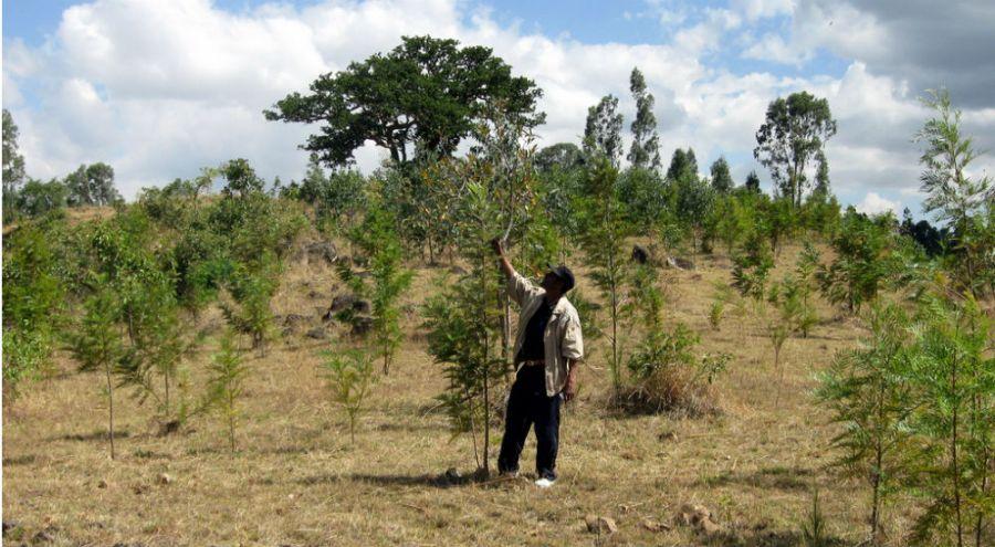 Homme replantant des arbres