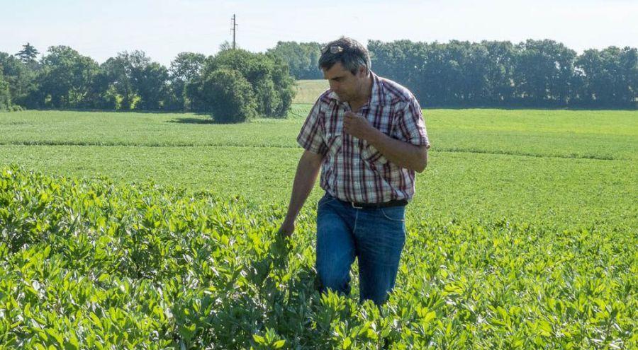Christophe Lamarlière marchant paisiblement dans l'un de ses champs