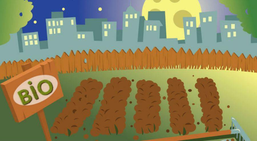 illustration d'un potager en ville au clair de lune