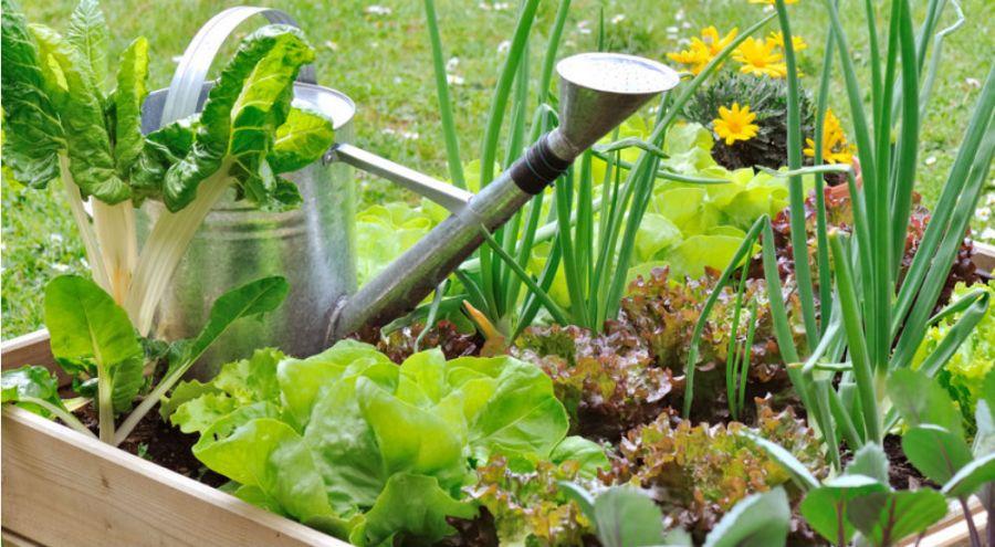 jardinage les r gles d 39 or pour arroser sans gaspiller bio la une. Black Bedroom Furniture Sets. Home Design Ideas