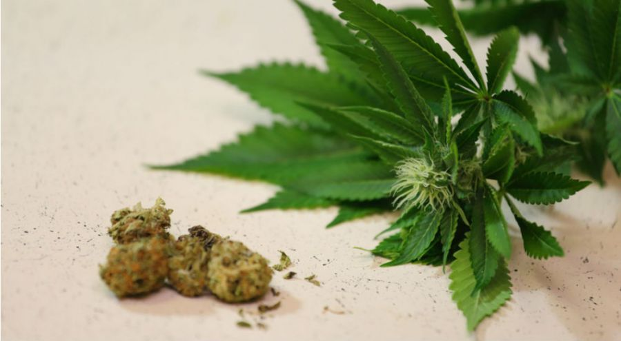 comment le cannabis peut vous rendre allergique aux fruits et l gumes bio la une. Black Bedroom Furniture Sets. Home Design Ideas