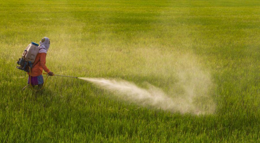 un homme déverse des pesticides dans un champ