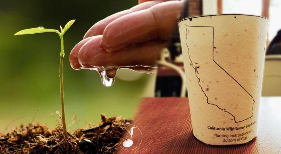 anti gaspi planter une tasse caf biod gradable pour. Black Bedroom Furniture Sets. Home Design Ideas