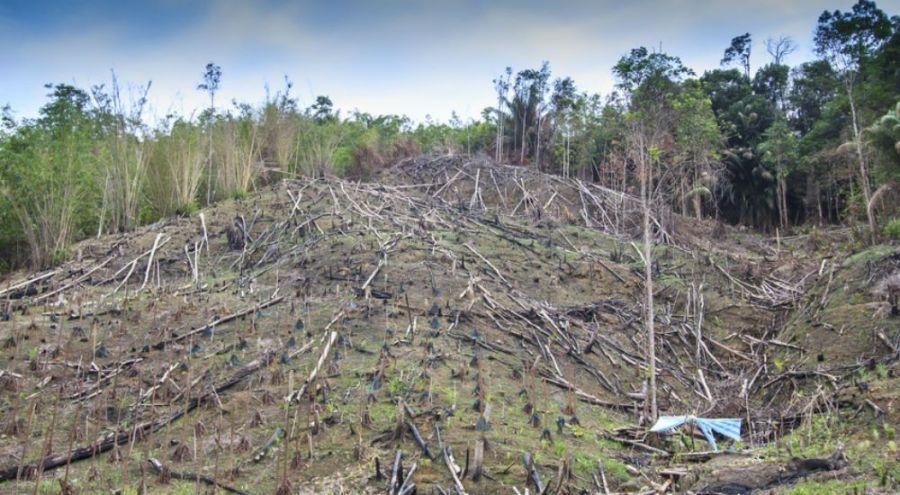Une partie de la forêt détruite en Malaisie