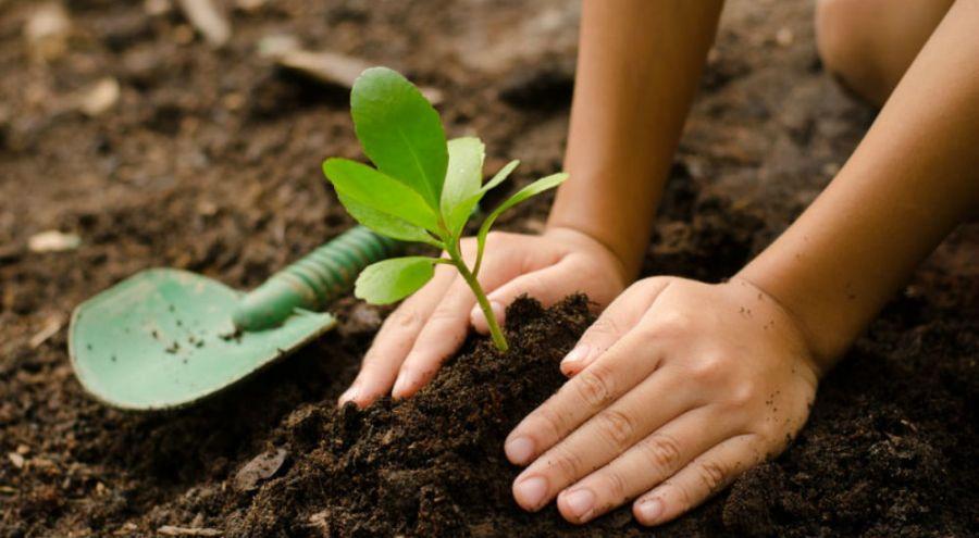 inde 50 millions d 39 arbres plant s en 24h pour les. Black Bedroom Furniture Sets. Home Design Ideas