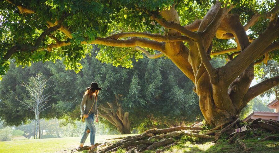 une femme marche sous un grand arbre