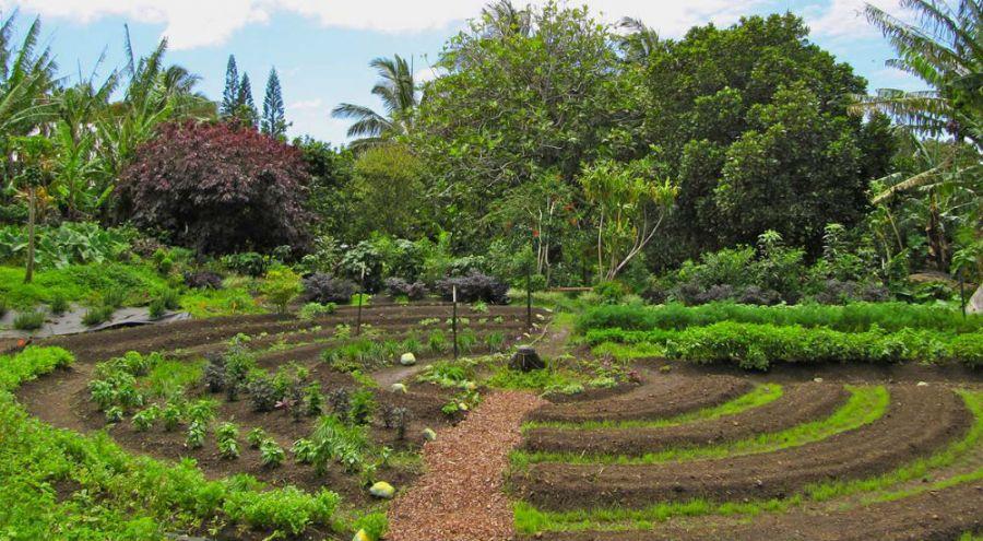 La permaculture est officiellement une activit rentable for Rendement permaculture