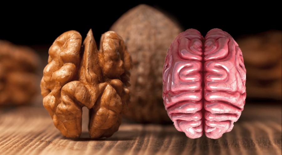 un noix qui ressemble à un cerveau