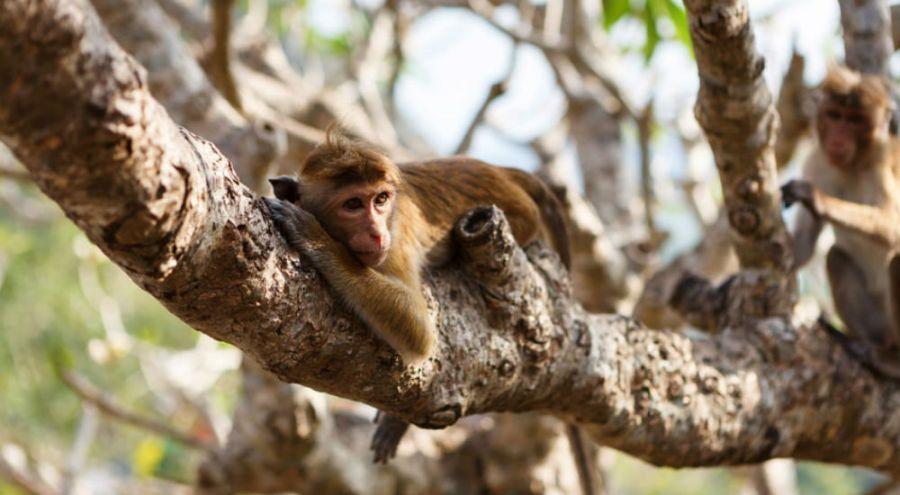 un singe suspendu à un arbre