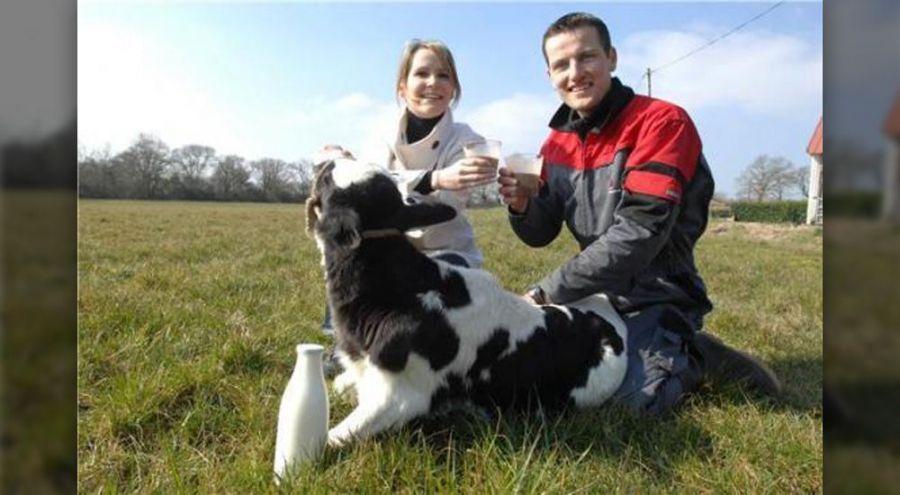 Aymeric Chérel et sa femme caresse un veau dans un champ
