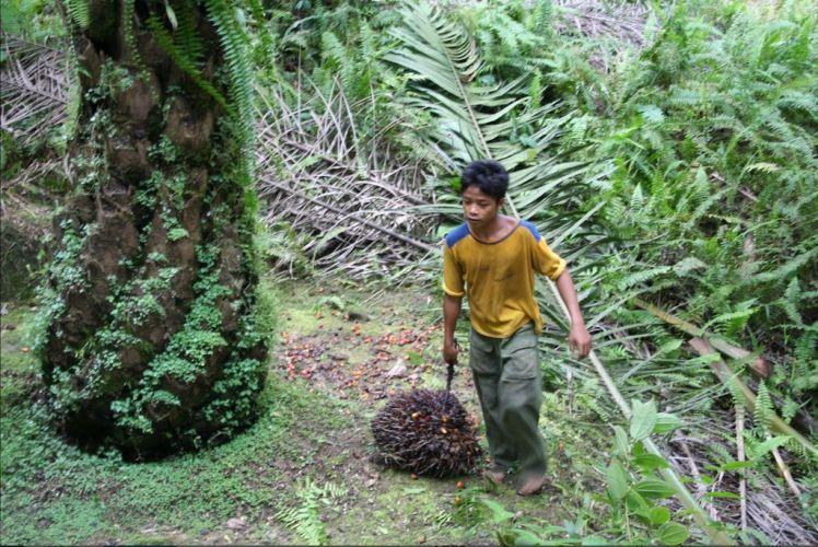 un enfant en train de transporter des fruits de palmier