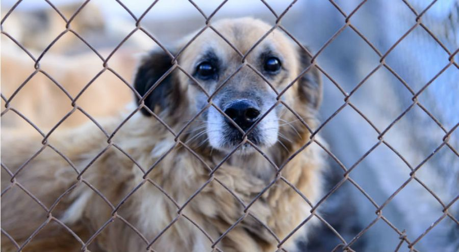 un chien triste derrière un grillage