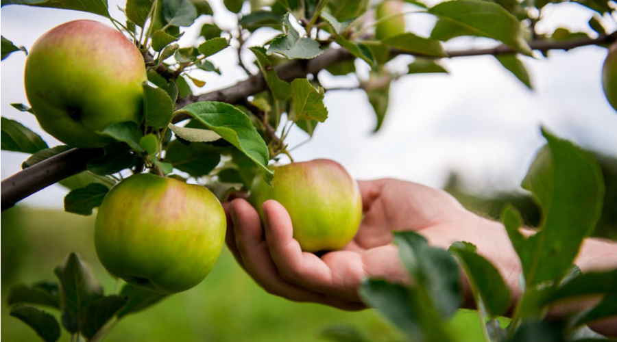 Une carte pour trouver des fruits et l gumes locaux et gratuits bio la une - Cueille fruit telescopique ...
