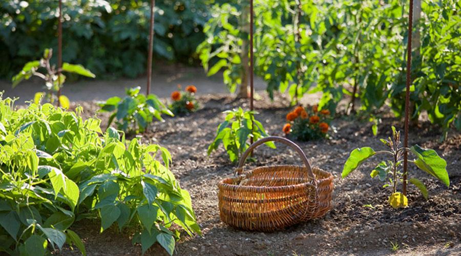 5 conseils pour jardiner sans trop se fatiguer bio la une for Conseil pour jardiner