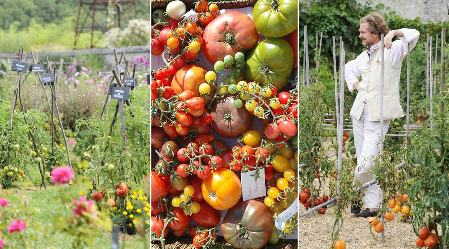Dans son potager le prince jardinier cultive 700 vari t s de tomates pour fa - Prince jardinier tomate ...
