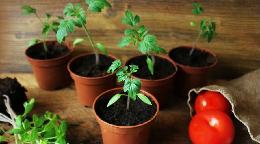 quels legumes en jardiniere jardinire de lgumes lgumes et potager comment russir les semis. Black Bedroom Furniture Sets. Home Design Ideas