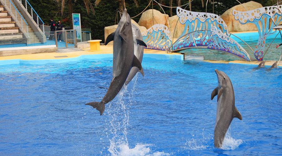 La captivité d'orques et de dauphins sera bientôt interdite en France
