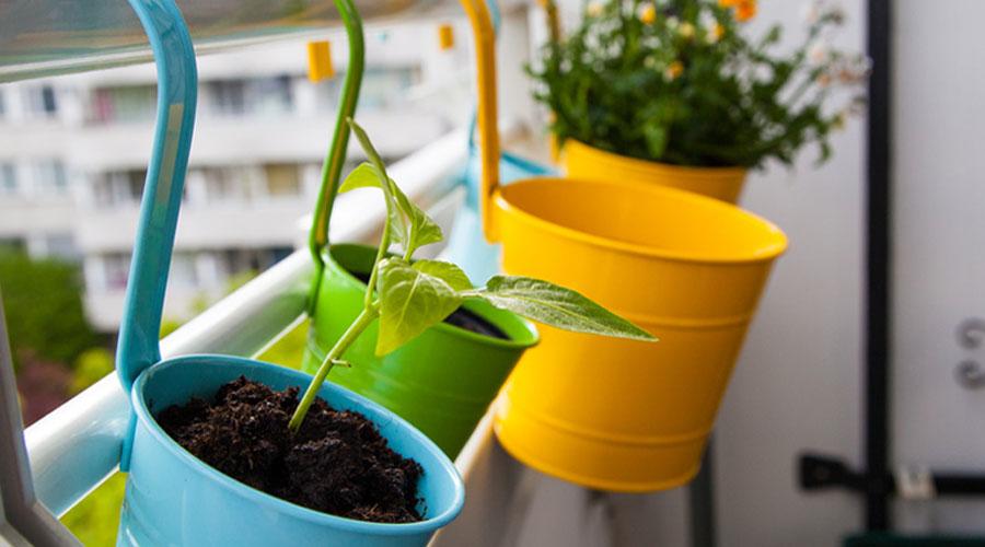 4 fruits à faire pousser sur son balcon