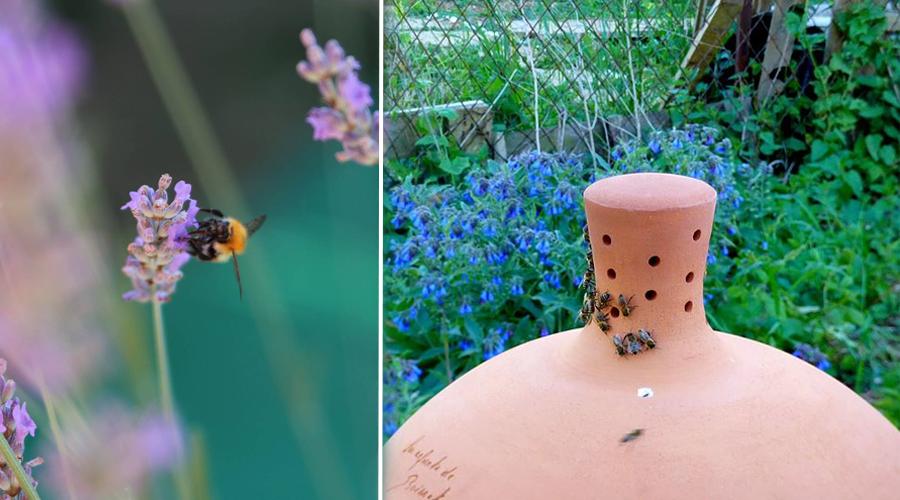 """À Dijon, des ruches """"sans miel"""" pour sauver les abeilles"""